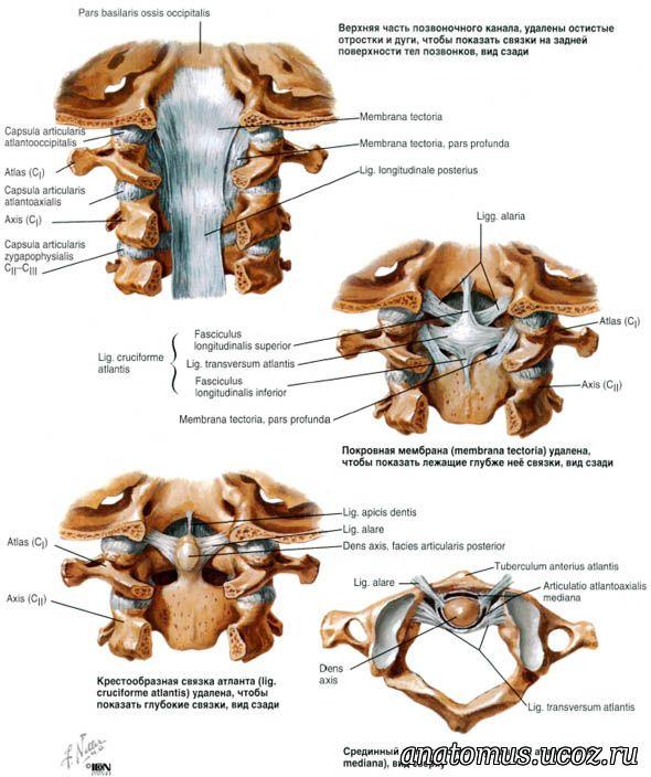 Обызвествление атланто-окципитальной связки как лечат