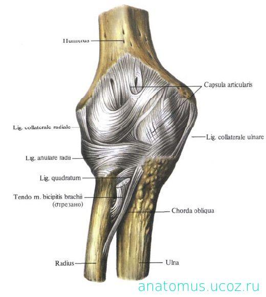 болят локтевой и плечевой суставы